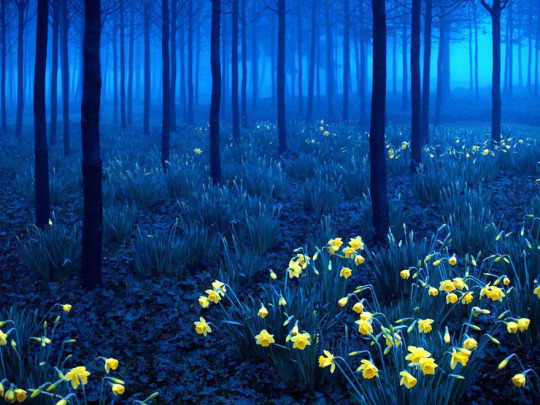 Moonlit Forest