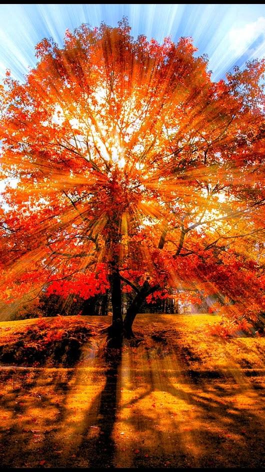 1 The Tree