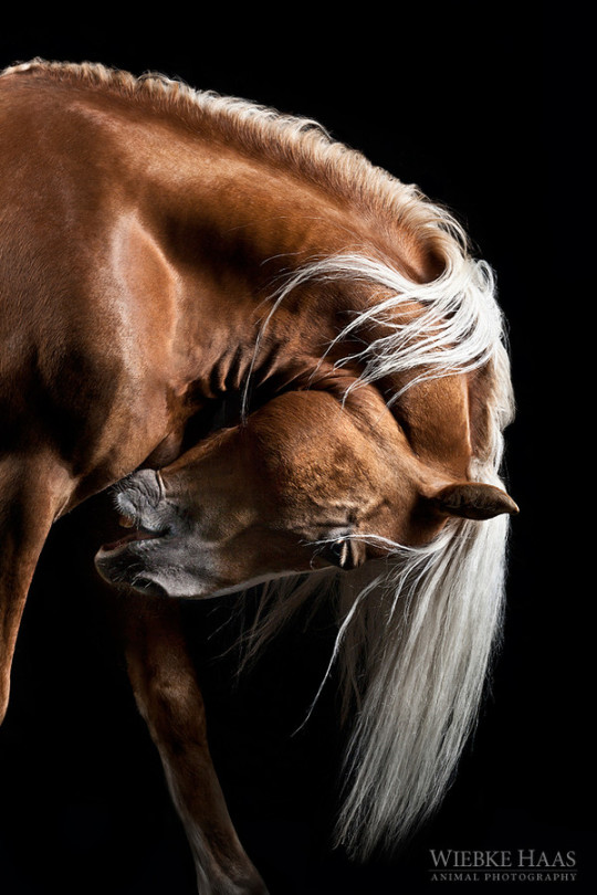 Gallop free