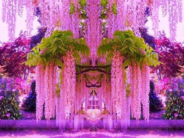 1 pink fantasy