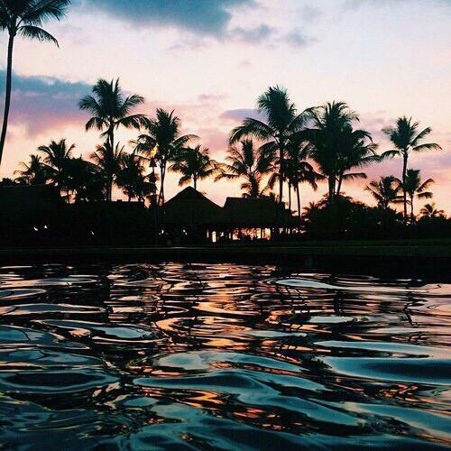 paradise night