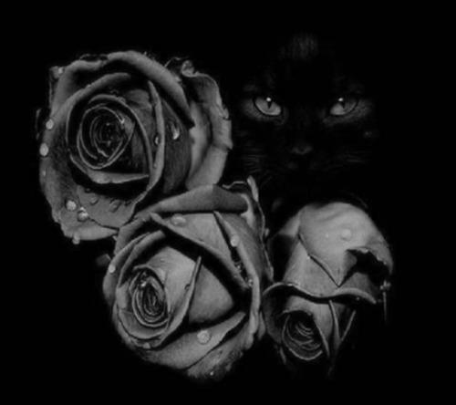 cat eyes roses