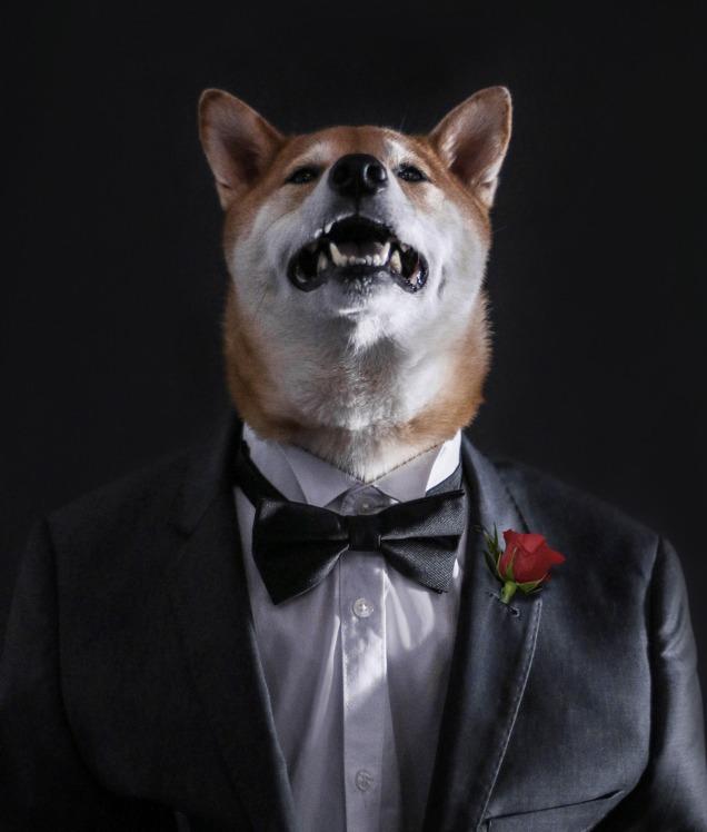 New York, NY-05/14/15 Menswear Dog Destination Wedding