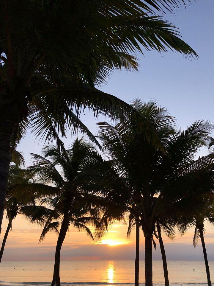 sunset thru palm trees