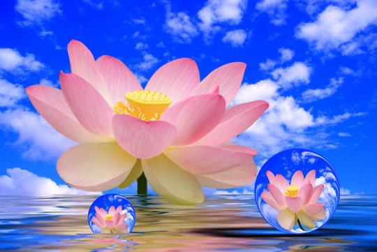 bubbles of flowers